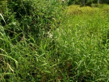 Land Measuring 500sqm, Off Kushenla Road, Ikate Elegushi, Lekki, Lagos, Mixed-use Land for Sale