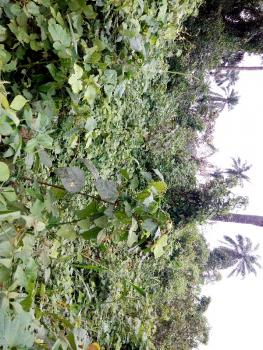 Agricultural Farm Land, Foursquare Camp Area, Obafemi Owode, Ogun, Mixed-use Land for Sale