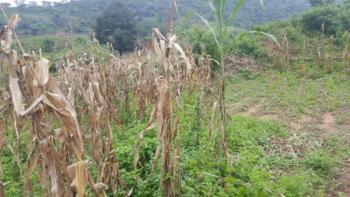 Vast Plot of Land, Kagini, Abuja, Residential Land for Sale