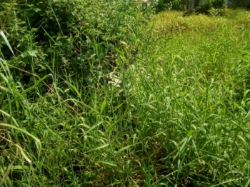Land Measuring 1500sqm, Regina Gardens, Ilasan, Lekki, Lagos, Residential Land for Sale
