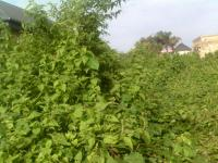 70 Acres of Land (can Be Sold in Smaller Plots), Ajah, Ajiwe, Ajah, Lagos, Residential Land for Sale