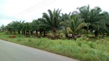 an Acre of Land, Along Obiaroko, Abraka Road, Ethiope East, Delta, Commercial Land for Sale