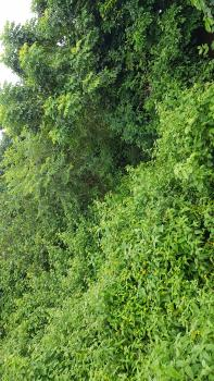 Royal Garden Estate, Royal Garden Estate, Lekki Gardens Estate, Ajah, Lagos, Land for Sale