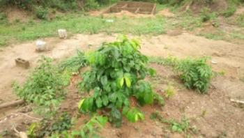 Land and Plots, Mawere, Isawo Near Agric Bus Stop, Agric, Ikorodu, Lagos, Residential Land for Sale