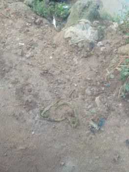 Half Plot of Land The Area Is Attributed with Constant Light Good Road, Ipaja, Lagos, Residential Land for Sale