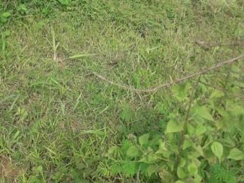 2 Hectares of Land, Anchorage Estate, Amuwo Odofin, Isolo, Lagos, Mixed-use Land for Sale