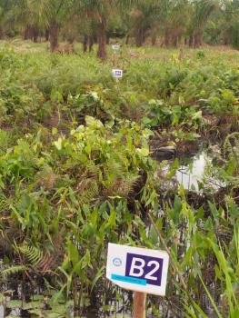 Residential Land, Behind Coscharis Rice Mill, Igbariam, Njikoka, Anambra, Residential Land for Sale