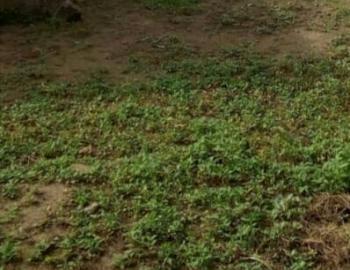 950 Sqm of Land, Oba Ogunusi Road, Ogba, Ikeja, Lagos, Mixed-use Land for Sale