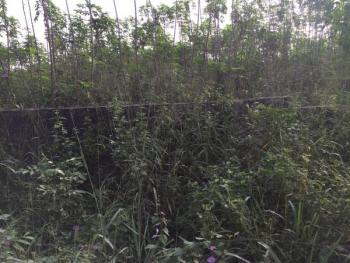 Full Plot of Fenced Virgin Land, Lajo Community Igbo Agbowa Oluodo, Ebute, Ikorodu, Lagos, Residential Land for Sale