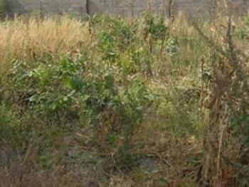 Bare Land Measuring 2,000sqm Mixed Development Area, Banana Island, Ikoyi, Lagos, Mixed-use Land for Sale