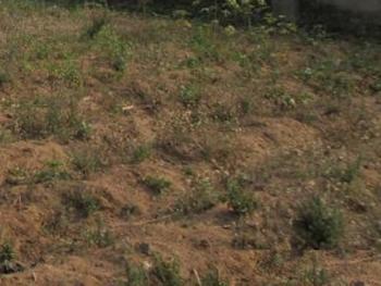 5 Plots of Land, Egbeda, Alimosho, Lagos, Mixed-use Land for Sale