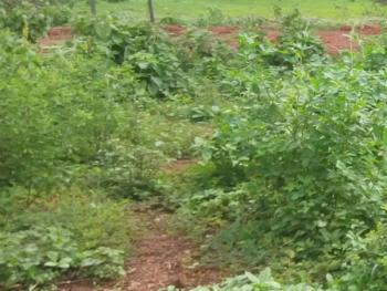 a Prime Fenced Land Measuring 3,907.343sqm, Igando, Ikotun, Lagos, Residential Land for Sale