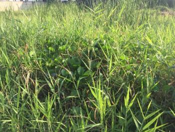 Land Measuring 1200sqm, Block 22, Off Admiralty Way, Lekki Phase 1, Lekki, Lagos, Mixed-use Land for Sale