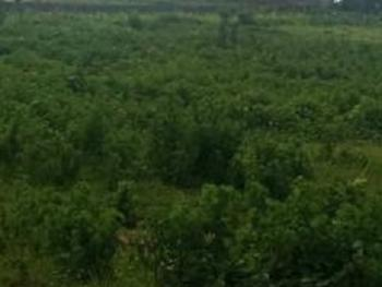 10 Hectares of Land for Recreation and Garden, Kukwuaba, Abuja, Mixed-use Land for Sale