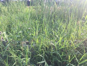 9 Plots of Land, Bogije  Facing The Lekki Epe Express Road, Lekki Expressway, Lekki, Lagos, Mixed-use Land for Sale