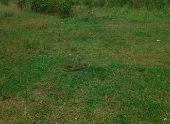 1acre of Land, Alapako Oke,ibogun, Ewekoro, Ogun, Mixed-use Land for Sale