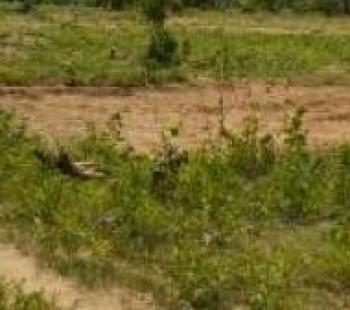 a Fenced Dry Land in a Corner Piece, Igbo Efon, Lekki, Lagos, Mixed-use Land for Sale