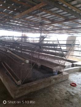 a Full Poultry and Fish Pond, Agunfoye Bridge, Off Igbogbo Bayeku Road, Igbogbo, Ikorodu, Lagos, Tank Farm for Rent