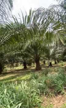 Available Farm Lands, Odeda, Ogun, Commercial Land for Sale
