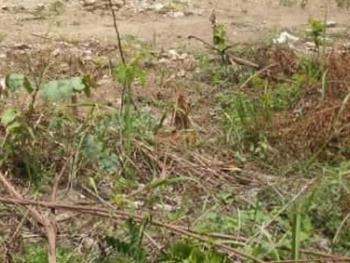 2 Plots of Mixed Development Land, Ojodu, Lagos, Mixed-use Land for Sale