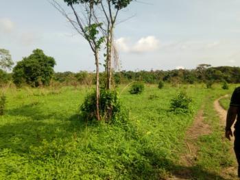 30 Acres of Farmland, Obada Oko, Obafemi Owode, Ogun, Mixed-use Land for Sale