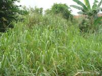 2 Plots  Of Land, , Port Harcourt, Rivers, Land For Sale