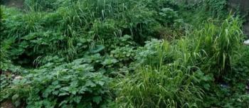 Farm Land, Sawonjo / Imasayi Town, Yewa North, Ogun, Mixed-use Land for Sale