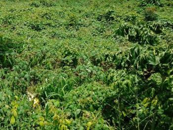 Corner Piece Land Measuring 2160sqm, Victoria Island (vi), Lagos, Commercial Land for Sale