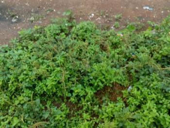 Fenced Land, Festac Town, Festac, Amuwo Odofin, Lagos, Mixed-use Land for Sale