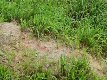 a Land Measuring 1,356sqm, Opebi, Ikeja, Lagos, Mixed-use Land for Sale