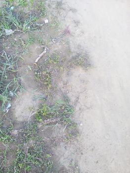 2 Plots of Land, Beckley Estate, Ahmadiya, Ifako-ijaiye, Lagos, Residential Land for Sale