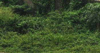 4095 Sqm Waterfront Property, Osborne, Ikoyi, Lagos, Mixed-use Land for Sale