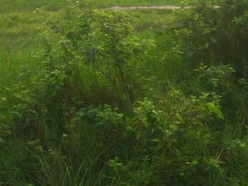Land Measuring 695.4sqm, Gbagada Phase 2, Gbagada, Lagos, Mixed-use Land for Sale