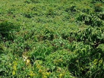 a Two and Half Plots of Bare Land, Apapa, Lagos, Commercial Land for Sale