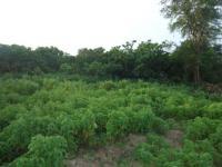 11 Hectares of Abuja  Farm Land with C of O for Sale!, Gwagwalada Farm Layout., Gwagwalada, Abuja, Commercial Land for Sale