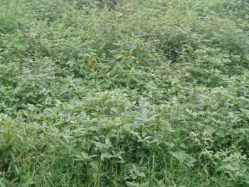 a Plot of Land Measuring 700sqm, Gra Phase 1, Magodo, Lagos, Mixed-use Land for Sale