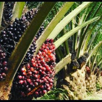 Large Extension of Palm Plantation with Good Return, Orile Iropo, Eruwa Town, Irepo, Oyo, Commercial Land for Sale