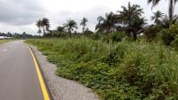 Acres of Industrial / Agriculture Land, Ubima, After Omagwa, Port Harcourt, Rivers, Commercial Land for Sale