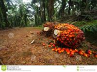 Palm Oil Plantation, Eket, Akwa Ibom, Industrial Land for Sale