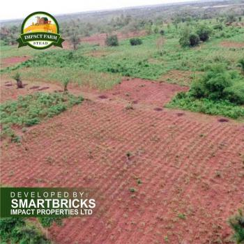 Fertile Farmland at a Very Cheap Price, Off Mokoloki Town, Papalanto Road. 30mins From Mowe, Obafemi Owode, Ogun, Commercial Land for Sale
