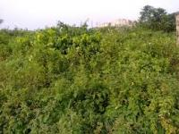 Land for Sale, Along Omuia  Health Centre Road, Port Harcourt, Rivers, Residential Land for Sale