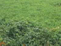 Land For Sale In Port Harcourt Rivers State, Port Harcourt, Rivers, Residential Land for Sale