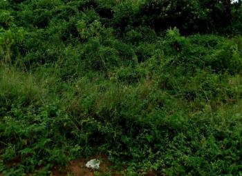 Genuine 23.6 Hectares of Land in a Serene Environment, Lagos Abeokuta Express, Abule Egba, Agege, Lagos, Mixed-use Land for Sale