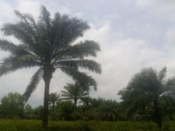 Over 20 Acres of Local Palm Tree Farm., Ihunbo Before Idiroko, Ipokia, Ogun, Mixed-use Land for Sale