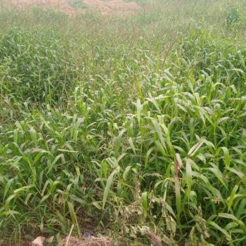 10.99 Hectares Mass Housing, Fcda R of O, Sabo Gida, Abuja, Mixed-use Land for Sale
