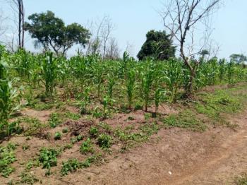56 Acres of Farmland, Km3, Off Iseyin Oyo Road, Idi Iya., Iseyin, Oyo, Commercial Land for Sale