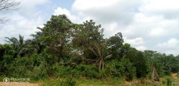 Dispute Free Land, Iwuru Farm Road, Biase, Cross River, Land for Sale