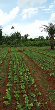Farmland in an Estate, Off Lagos-ibadan Expressway, Obafemi Owode, Ogun, Mixed-use Land for Sale