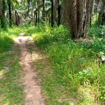 300 Plots of Land, Ohuba, Ohaji-egbema Lga, Owerri West, Imo, Commercial Land for Sale