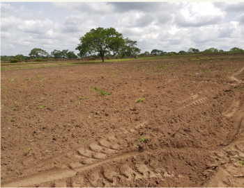 Arable, Well-bonded, 100 Acres Farmland Available, Ogbomoso, Ogbomosho North, Oyo, Industrial Land for Sale